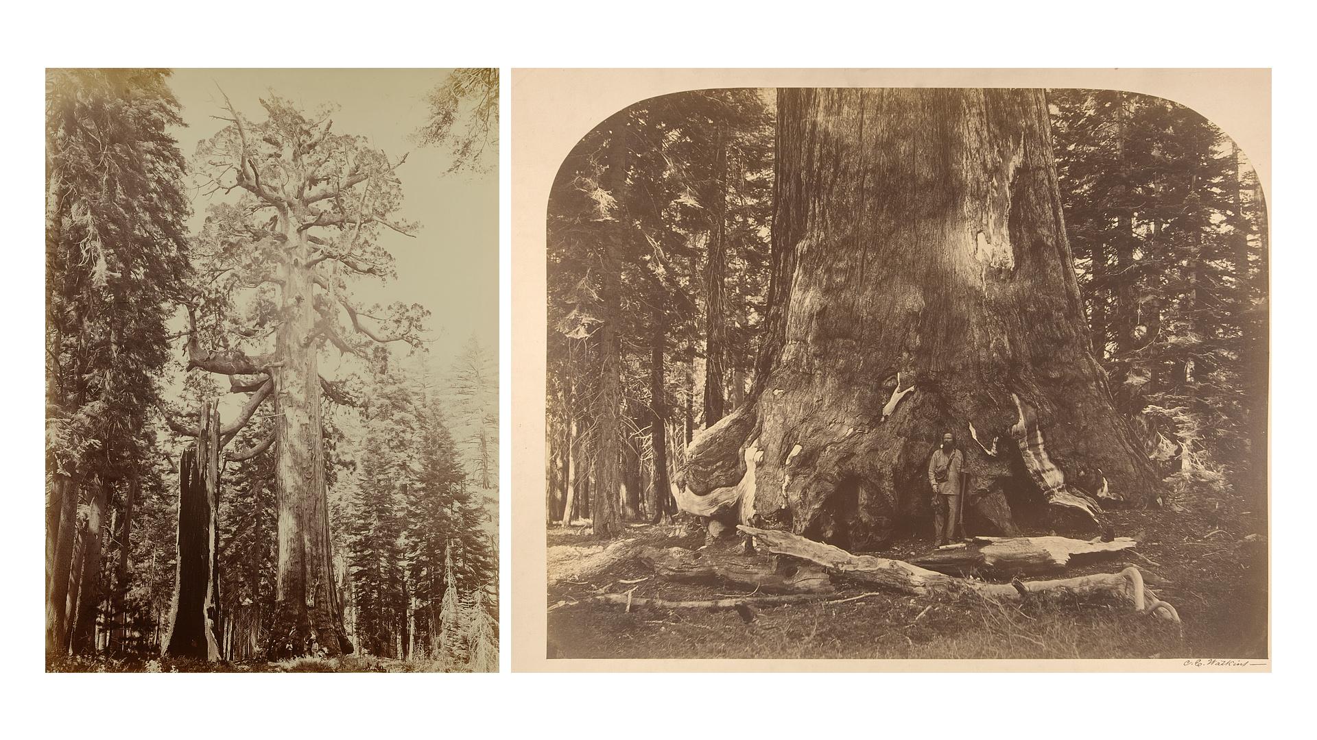 Carleton E. Watkins - Historia de la Fotografía - José Álvarez Fotografía