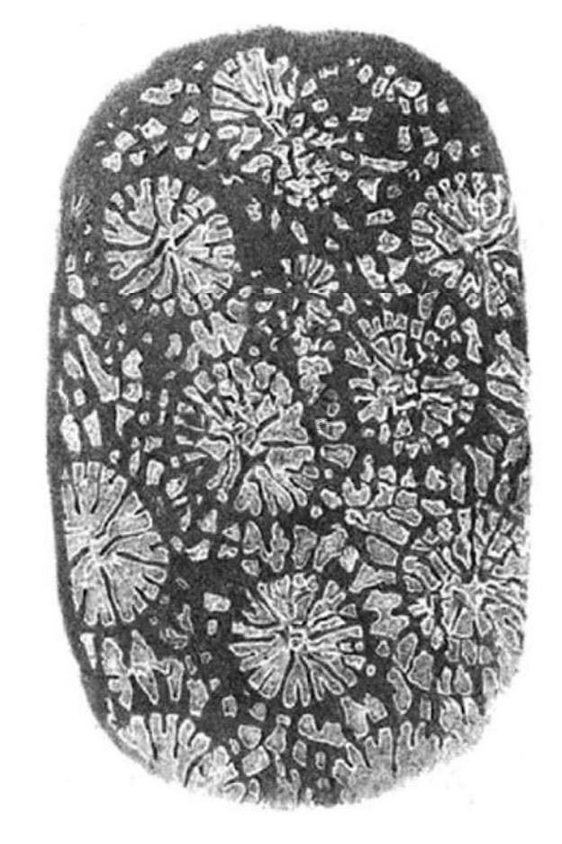 Coral de Ibbetson - Historia de la Fotografía - José Álvarez Fotografía