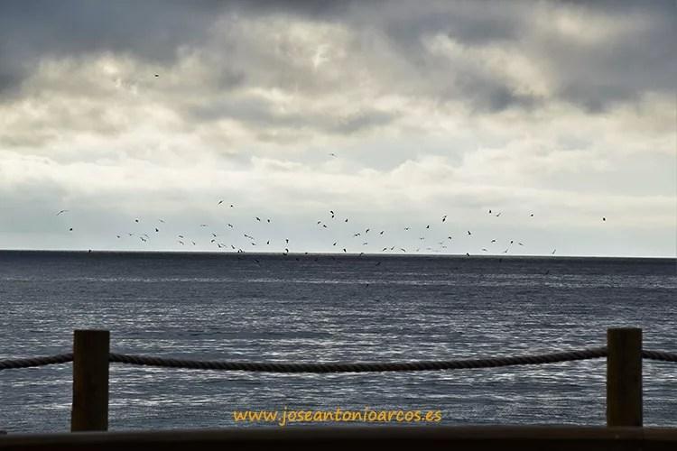 Gaviotas en el paseo de las Salinas de Cabo de Gata