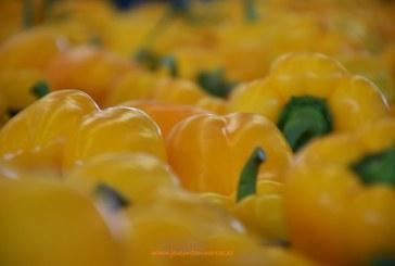 El amarillo para flow-pack dispara su cotización