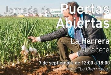 Día 7 de septiembre. Jornada de puertas abiertas de cebollas de Bejo. Albacete
