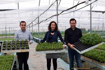 Un laboratorio almeriense revoluciona el sexado de papayas
