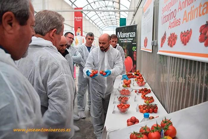 Jornada-Demos-Enza-Zaden-tomates-6