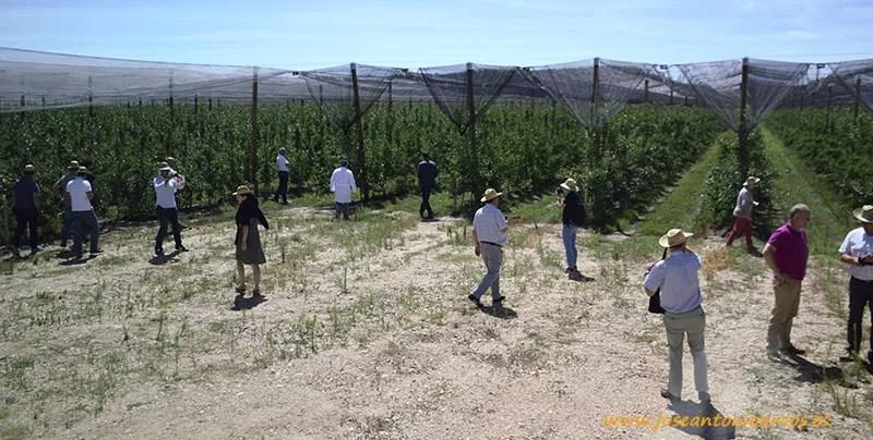 La Rasa, la finca de manzana más grande del mundo, situada en Soria y perteneciente a NUFRI