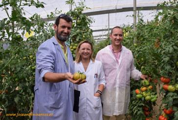El consorcio Traditom rescata los mejores tomates autóctonos del continente europeo