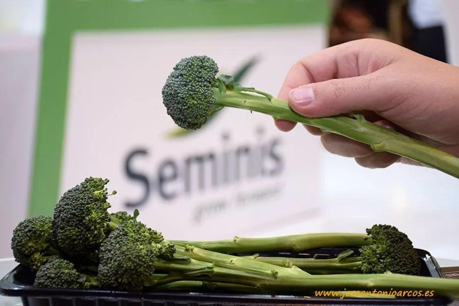 Brócoli Bellaverde de Seminis. Mr. Broko