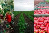 Los hortícolas en Serbia