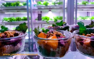 Good Bank, Berlín, Rijk Zwaan, Love My Salad.