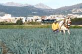 La granadina Los Pisaos abrirá una delegación en Centroeuropa