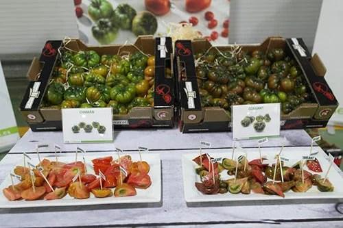 Tomates Colulant y Chamán - joseantonioarcos.es