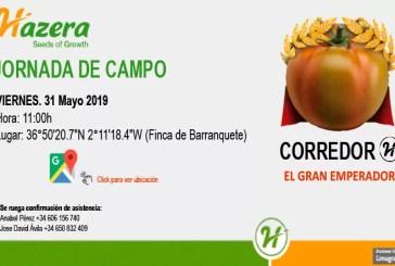 Día 31 de mayo. Jornada de campo de tomate de Hazera