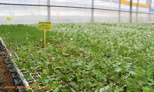 'Bufet de insectos' con diferentes plantas. /joseantonioarcos.es