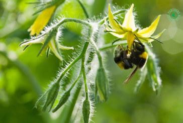 Koppert recomienda evitar la luz solar directa sobre las colmenas de abejorros