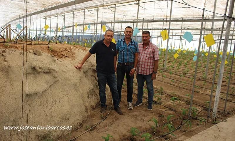 José Luis González, técnico de Biosur; Paco Fernández, técnico de Murgiverde; y José Luis González, agricultor de esta cooperativa. /joseantonioarcos.es