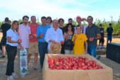 Girona prevé recolectar un 12% más de manzanas que hace un año