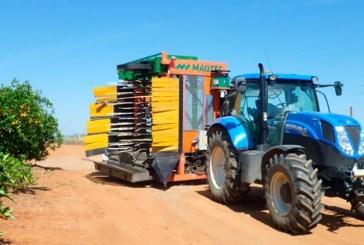 Nuevas cosechadoras para recolectar cítricos y abaratar costes