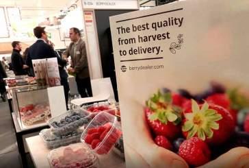 Cifras récord en la exportación andaluza de frutos rojos