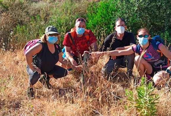 La reforestación de la Sierra de Gádor sobrevive al confinamiento