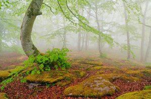 Bosque en niebla, Monte Santiago, Burgos
