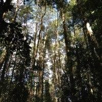 Arbustos Gigantes del Bosque