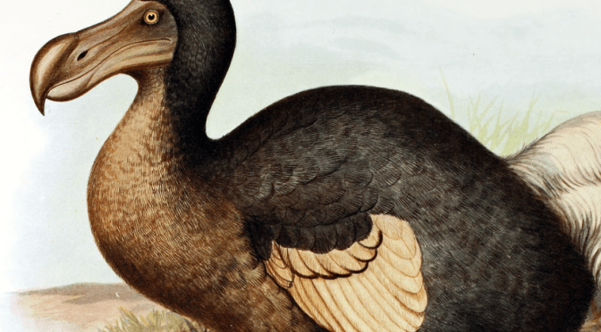 Dodo, par Frederick William Frohawk, via Wikimedia Commons