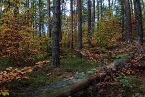 Wald(1)