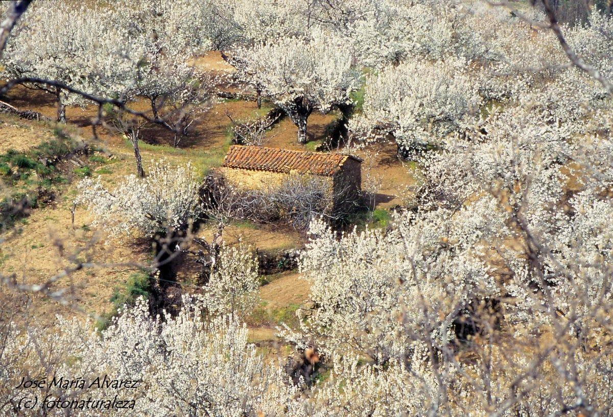 Valle del Jerte 4