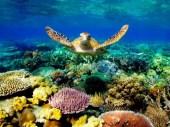 marine biology logo