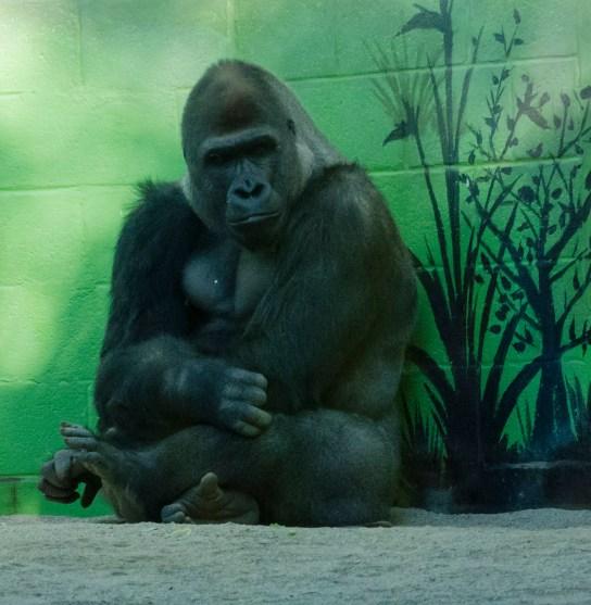 San DIego Zoo 0109_3