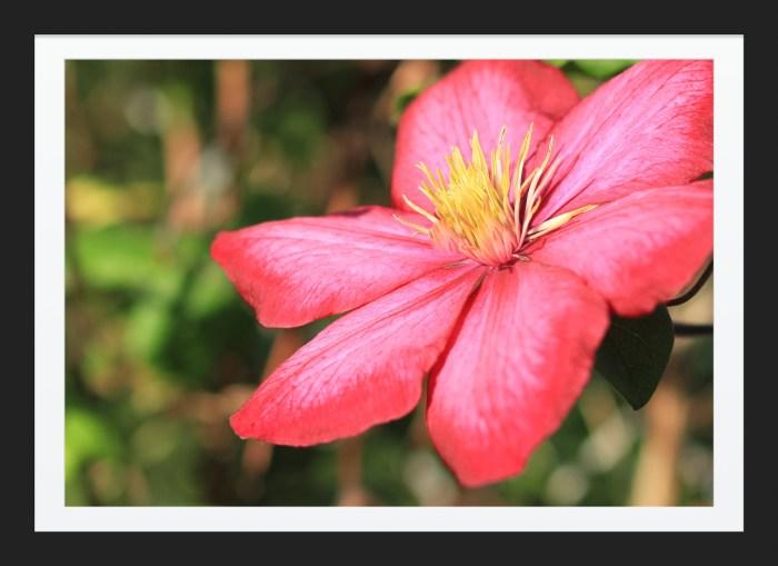 Beauty Tropical Flower Image Sale