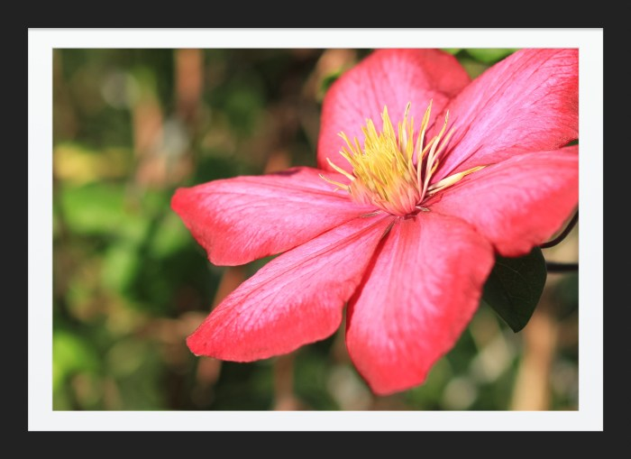 Beauty Tropical Flower Image Sale