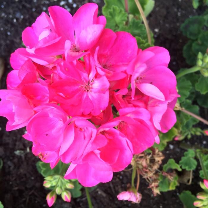 Spring Flower 001 (11)