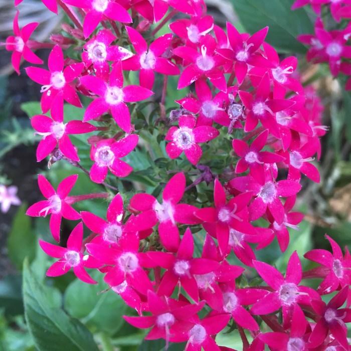 Spring Flower 001 (4)