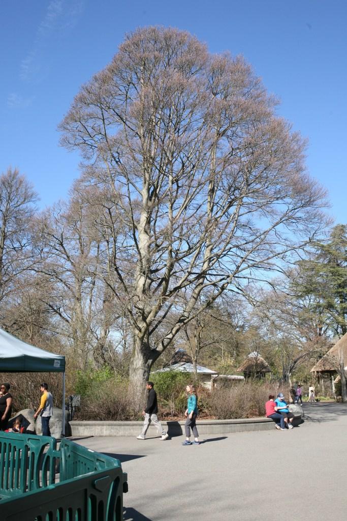 Woodland Park Zoo Entrance