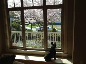 April 13, 2012: The Doggy Guilt Trip!