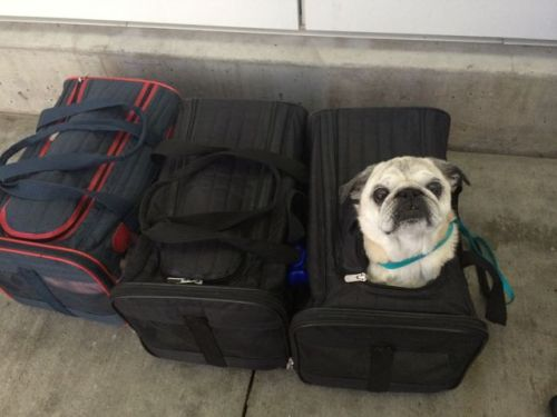 October 18, 2014: The Eagles Has Landed!  Also, A Japanse Girl And Three Dogs!