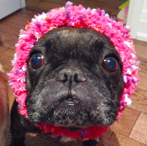 October 27, 2015: Akemi's Fall Doggy Couture Collection!