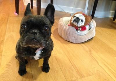 November 27, 2015: Rude Dogs And Dark Matter!