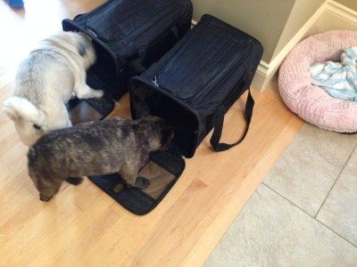 August 31, 2016: L.a.!  Meals!  Dogs!