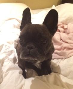 October 4, 2016: The Lulu Update!