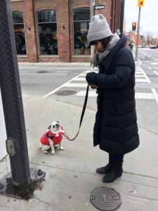 December 4, 2016: Snow Monkeys On The Brink!  Suji Settles In!