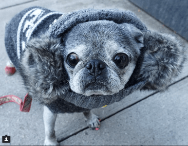 November 26, 2017: My Cold Weather Dog!