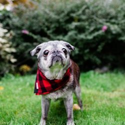 October 15, 2018: Back On The Bike!  The Suji Feature!