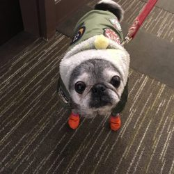 January 20, 2019: Suji Sunday!