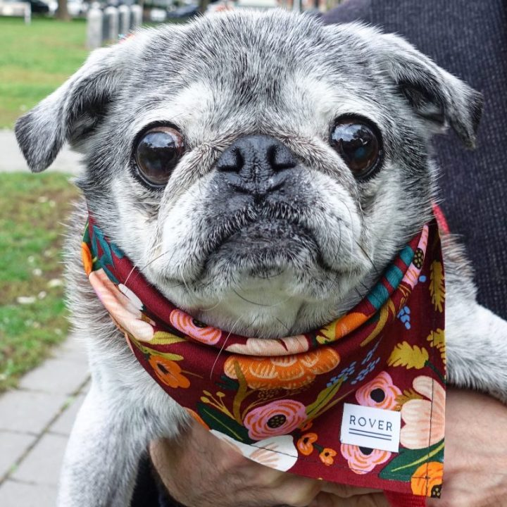 October 14, 2018: Suji Sunday!  With Special Guest Star Lulu!