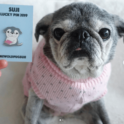 January 7, 2019: Suji Sunday – One Day Late!