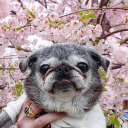 May 19, 2019: Suji Sunday!
