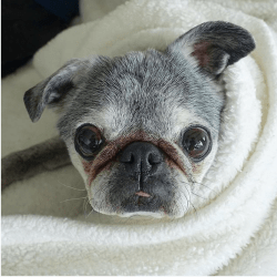 June 9, 2019: Suji Sunday!