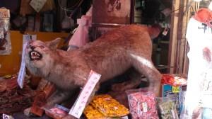 The Tsukiji lynx.