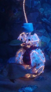 Even the fish are in the Christmas spirit.